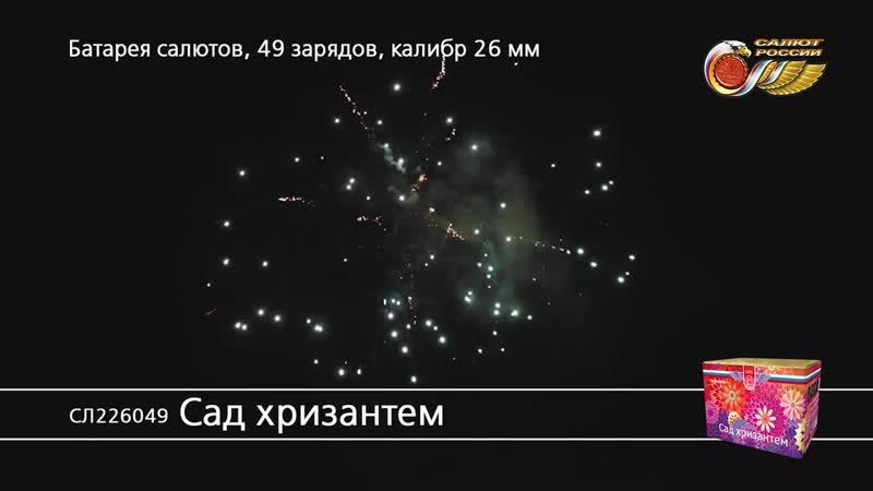 СЛ226049 Сад хризантем 4 1