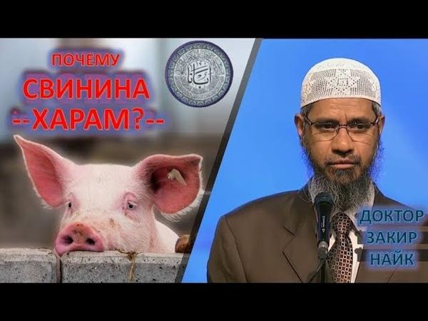Доктор Закир Найк о Свинине, Смотреть Всем Христианам