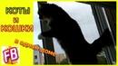 FB Кошачьи будни Кошка делает массаж Кот и кошка играют в догонялки