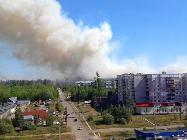 Возгорание зеленых насаждений (11.08.2018)