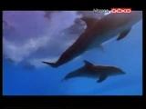 Музыка из рекламы LG OLED TV Adiemus - Adiemus