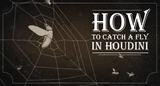 How To Catch a Fly In Houdini Project Demo