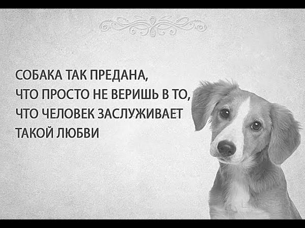 Открытки про верность собак