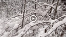 ♫ Steve Jablonsky ~ Infinite White ~ Потрясающие красоты зимы Ленинградская область