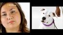 Nat Geo Талантливые животные Умные собаки 1080р