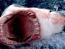Челюсти 3D Shark Night 3D (2011)