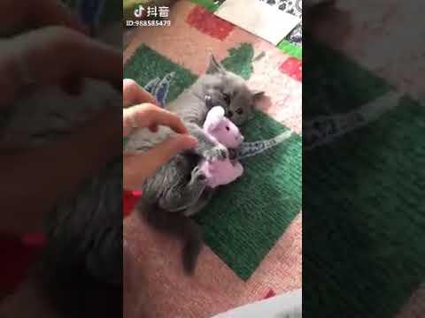 Нельзя маленького котеночка обижать! !((