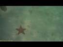 Саона морские звёзды в Карибском море