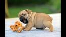 Смешные и милые собаки - Смотри и улыбайся!