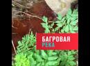 В Каширском районе Подмосковья приток Оки окрасился в кровавый цвет — Москва FM