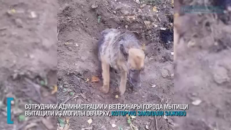 закопали собаку