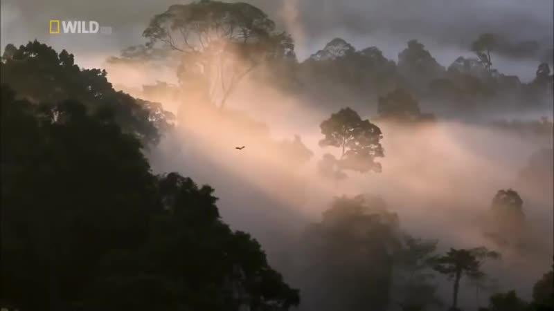 дикая природа Тайланда 🌴💟☝️