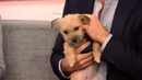 """Harry Connick Jr on Instagram: """"After meeting PuppyBowl rescues, Harry began fostering a pup named Tuka. TODAY Harry and his family have exciting ..."""