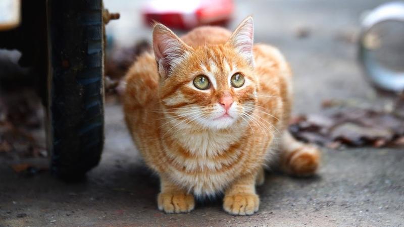 Живший на станции кот каждый день подбегал к людям и просил покушать. И вот однажды...