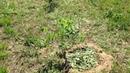 Посадил первые плодовые деревья - 2014-05-23