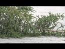 Неизвестные срубили хвойные деревья в Златоусте на 40 лет Победы