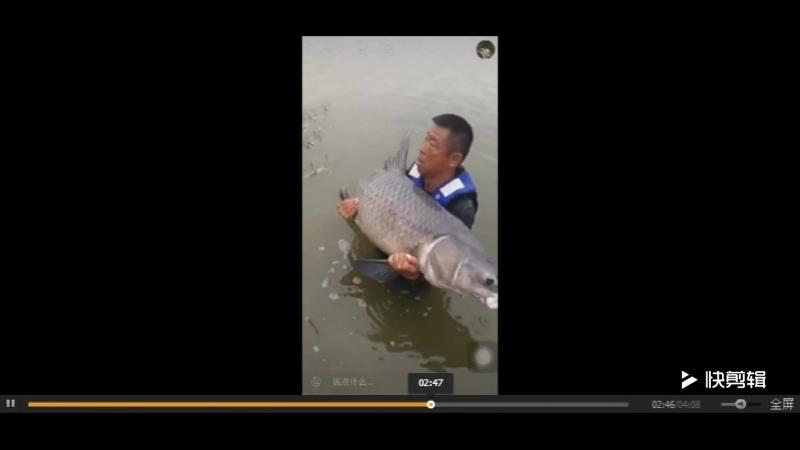 китайский мастер промысел, ловить 150 catties зеленых рыбы