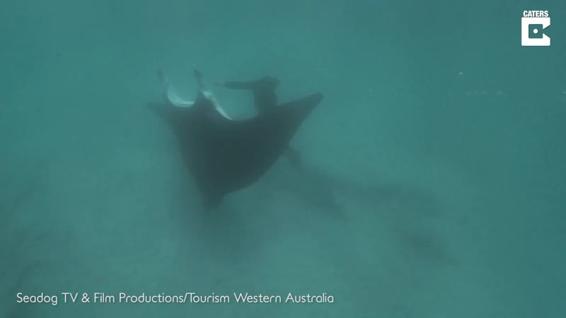 Manta Ray Asks For Hook To Be Removed