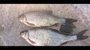 Рыбалка на дамбе Финского залива. Крупная плотва, густера, подлещик. 13.05.2018