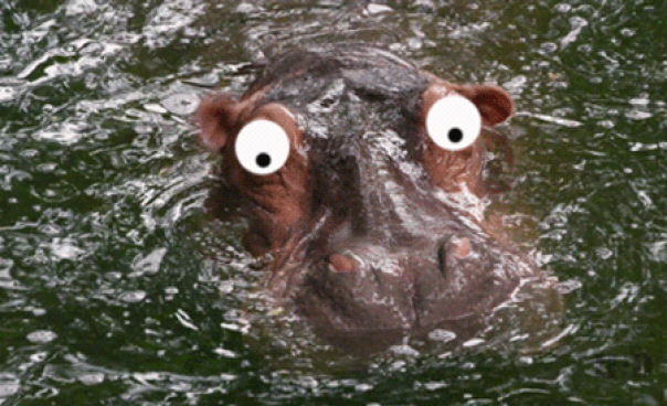 Красивые крещением, бегемот гифка