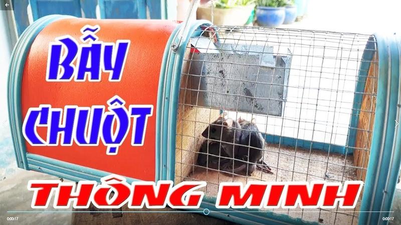 RẬP CHUỘT THÔNG MINH - Bẫy chuột bắt được nhiều con cùng lúc - Đất và Người Miền Tây