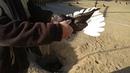 Николаевские голуби друга моего дедушки Харьковская область