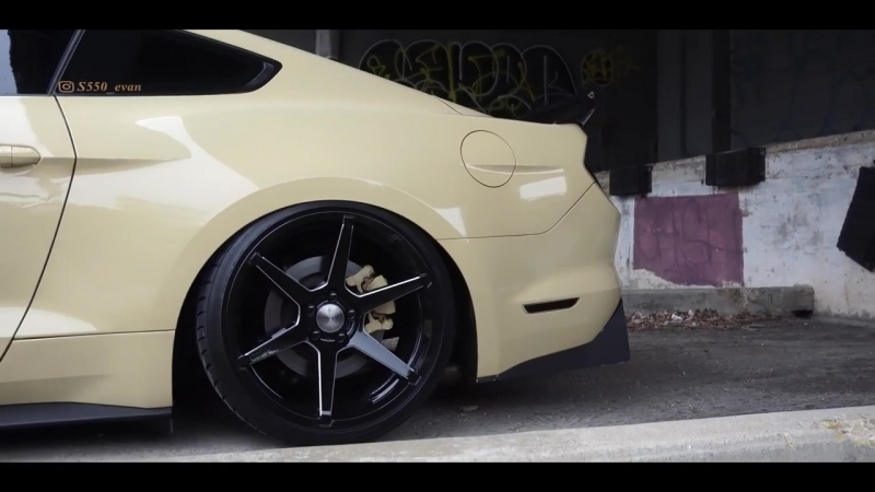 The RETURN of PUDDIN! | Perfect Stance
