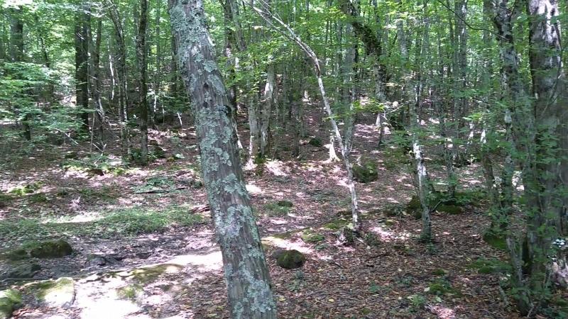 лес, где дольмены