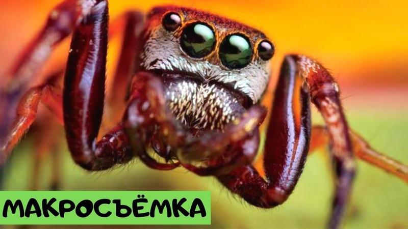 Макросъемка. Удивительный мир насекомых