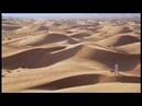 Hunting Hounds of Arabia
