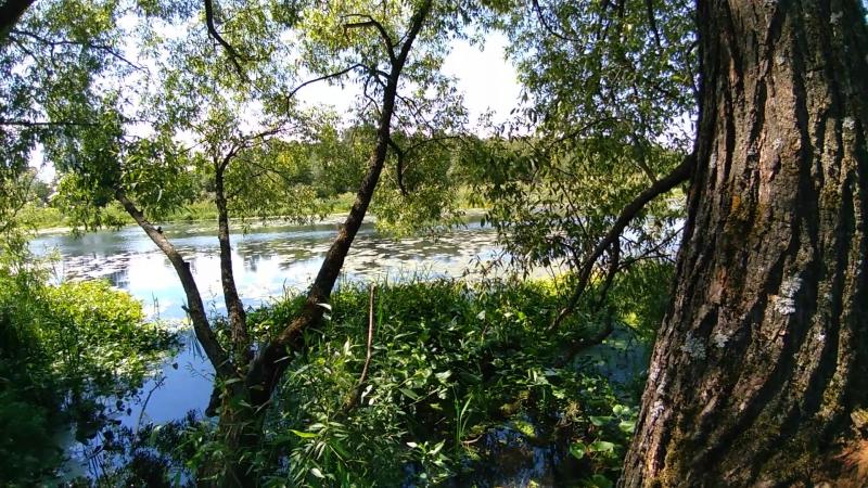 Клязьменские джунгли ( Бурково ) 🌞🤗