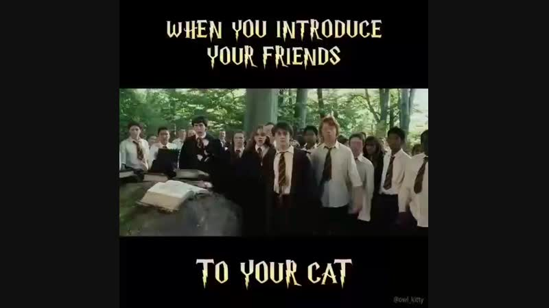 When you introduce your friends to your cat :D