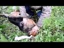 Шокирующее видео. Женщина издевалась над своими собаками