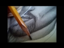 Портрет простым карандашом. Дима Билан.