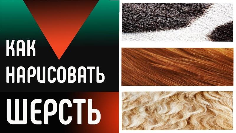 МАСТЕР КЛАСС Как нарисовать шерсть или мех цветными карандашами