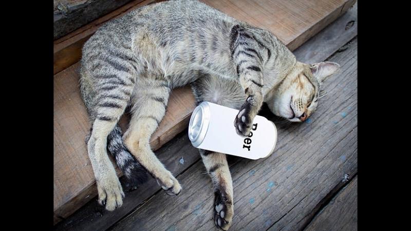 Девять жизней кота Фрица (США 1974 HD) 18 Комедия, МультфильмHD
