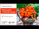 Пишем картину маслом Натюрморт рябиновая гроздь Юлия Фадюшина