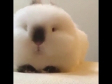 600 Fluff Bunny time