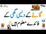 Cow Ghee Natural Cow Desi Ghee desi ghee benefits ghee uses how to use ghee for weight loss