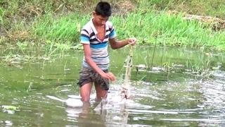 Net Technology Fishing in Village Cannal | Net Country Fish Hunting by little boy #TrueNature