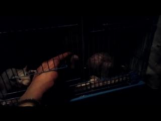 брошенные крысочки (парни)