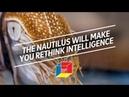 The nautilus will make you rethink intelligence