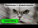 Приколы. Видео прикол про животных.