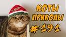 Приколы с Котами ДО СЛЁЗ Смешные кошки 2018 коты
