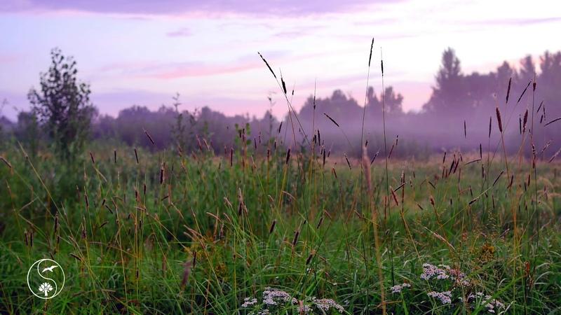 НЕЖНЫЙ РАССВЕТ НА ЛУГУ. СВЕТАЕТ. Травы, цикады, звуки, сверчки, звуки природы, пение птиц, природа
