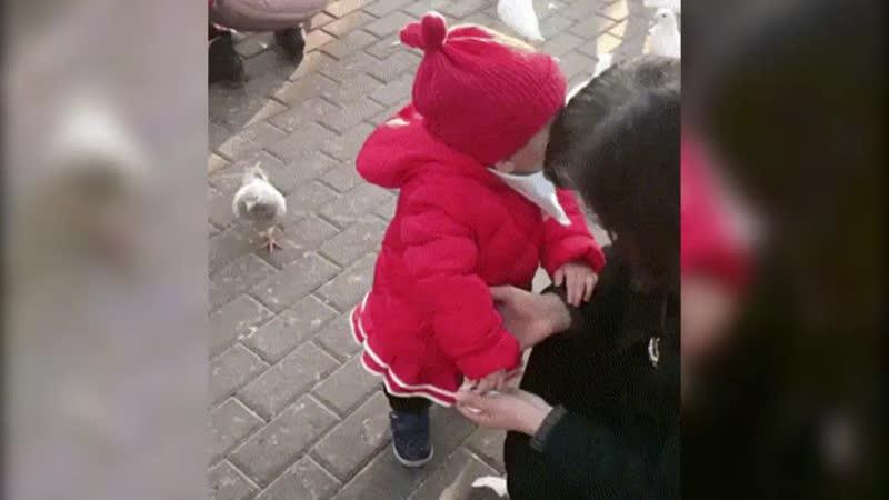 [v-s.mobi]Маленькая девочка отбирает корм у наглого голубя.mp4