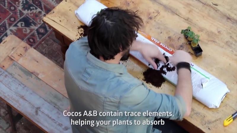 Применение удобрений Cocos A и Cocos B от Plagron