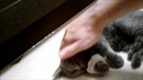 Прощание с моим любимым котикомТимохой