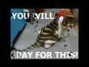Подборка самых дурацких стрижек для животных