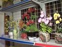 Hoa pha lê Đặng Hoàng Lương Thu Thảo